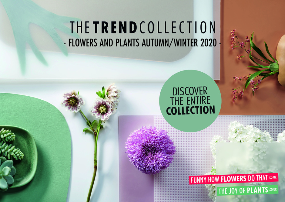 The Trend Collection Autumn/Winter 2020