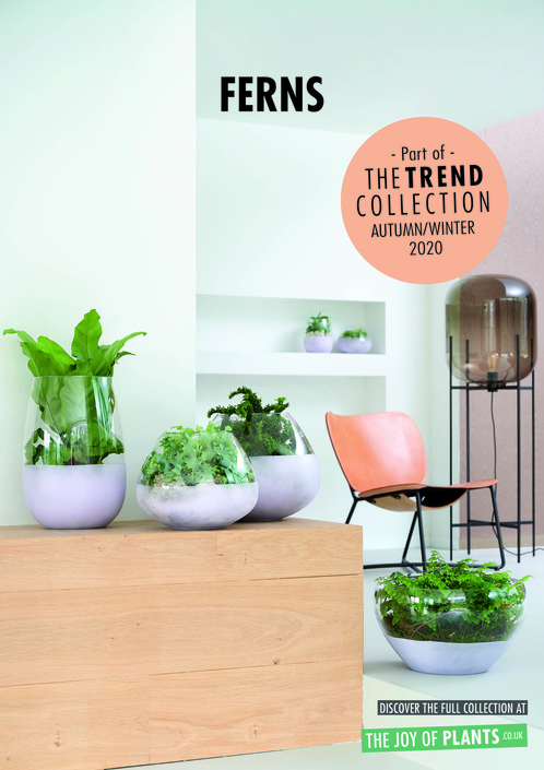 The Trend Collection A/W20 | Houseplants Collection