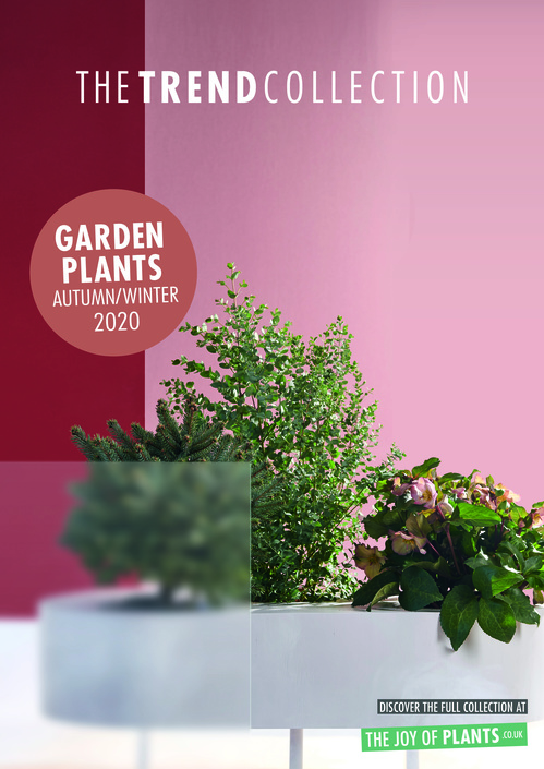 The Trend Collection Autumn/Winter | Garden Plants Collection