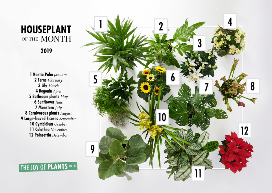 Houseplants of the Month 2019
