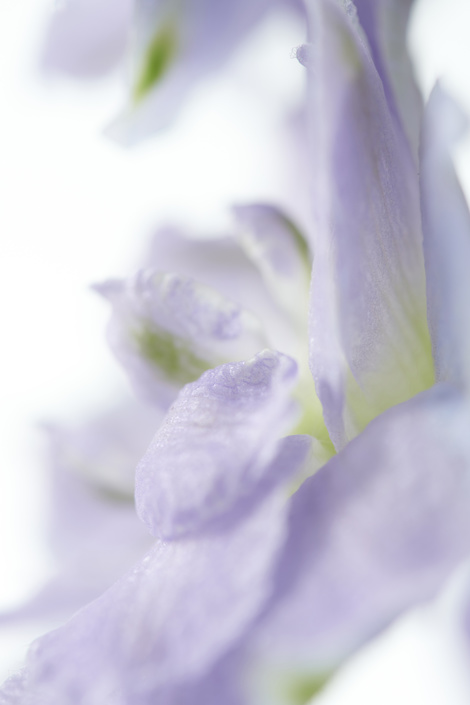 The Trend Collection Spring/Summer 2021 | Delphinium