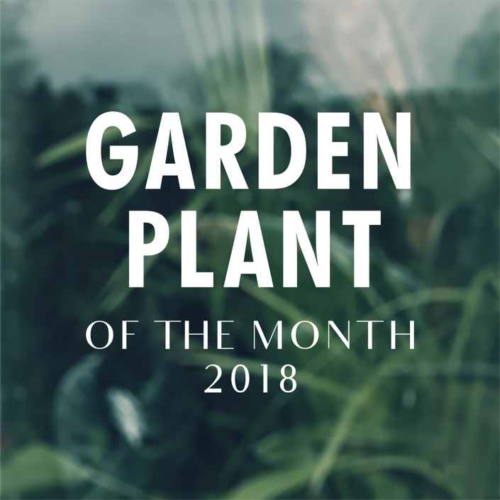 Garden Plant of the Month 2018