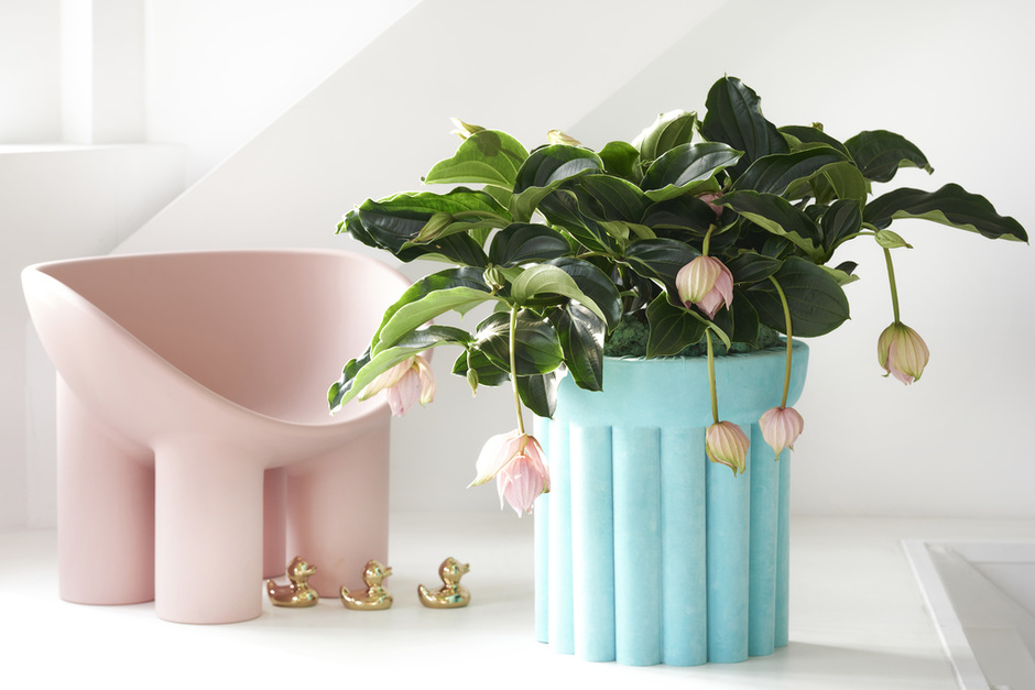 The Trend Collection Spring/Summer 2021 | Medinilla