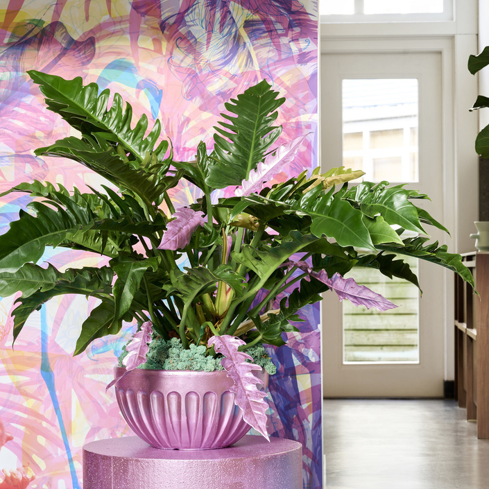 The Trend Collection Spring/Summer 2021 | Philodendron