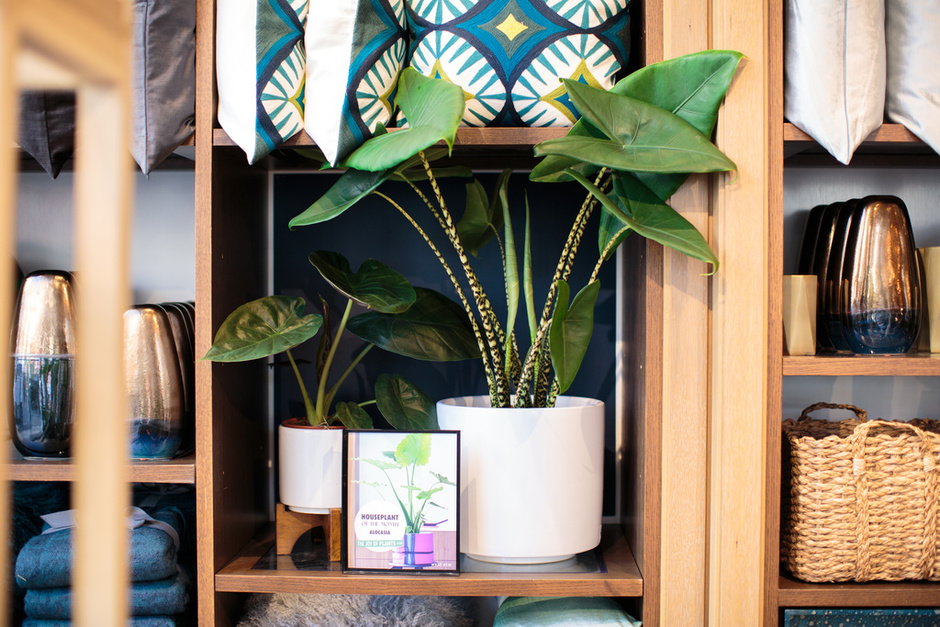 Thejoyofplants.co.uk x west elm
