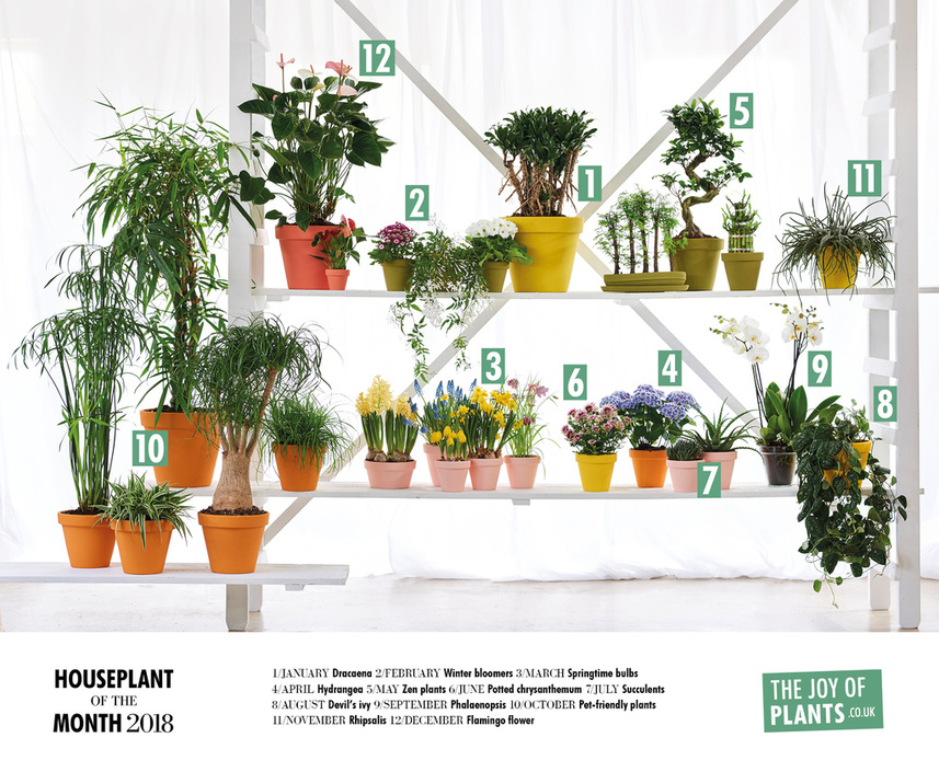 Houseplants of the Month 2018