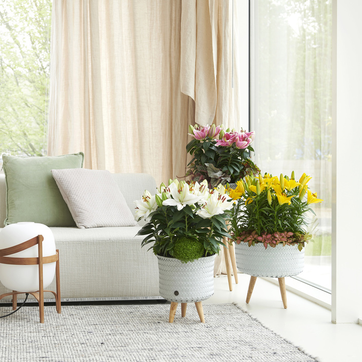March 2019: lily  Houseplant of the Month