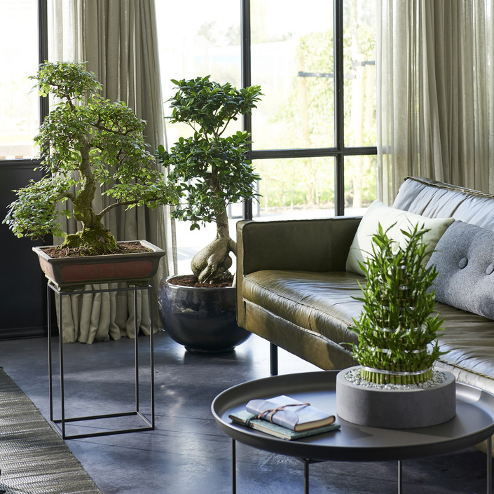 May 2018: Zen plants Houseplants of the month
