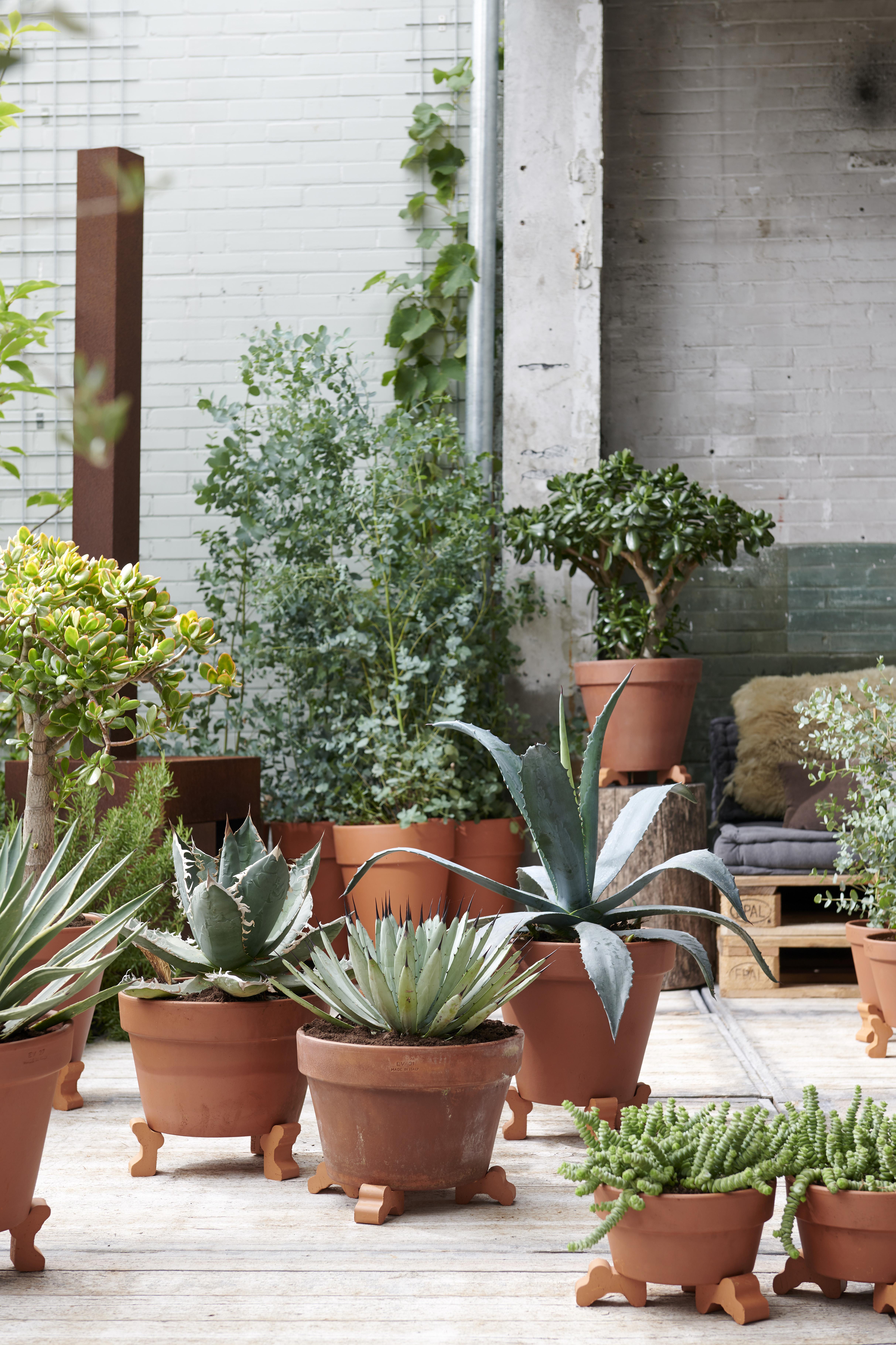 Augustus 2019: tuinplanten voor een Zorgeloze Zomertijd