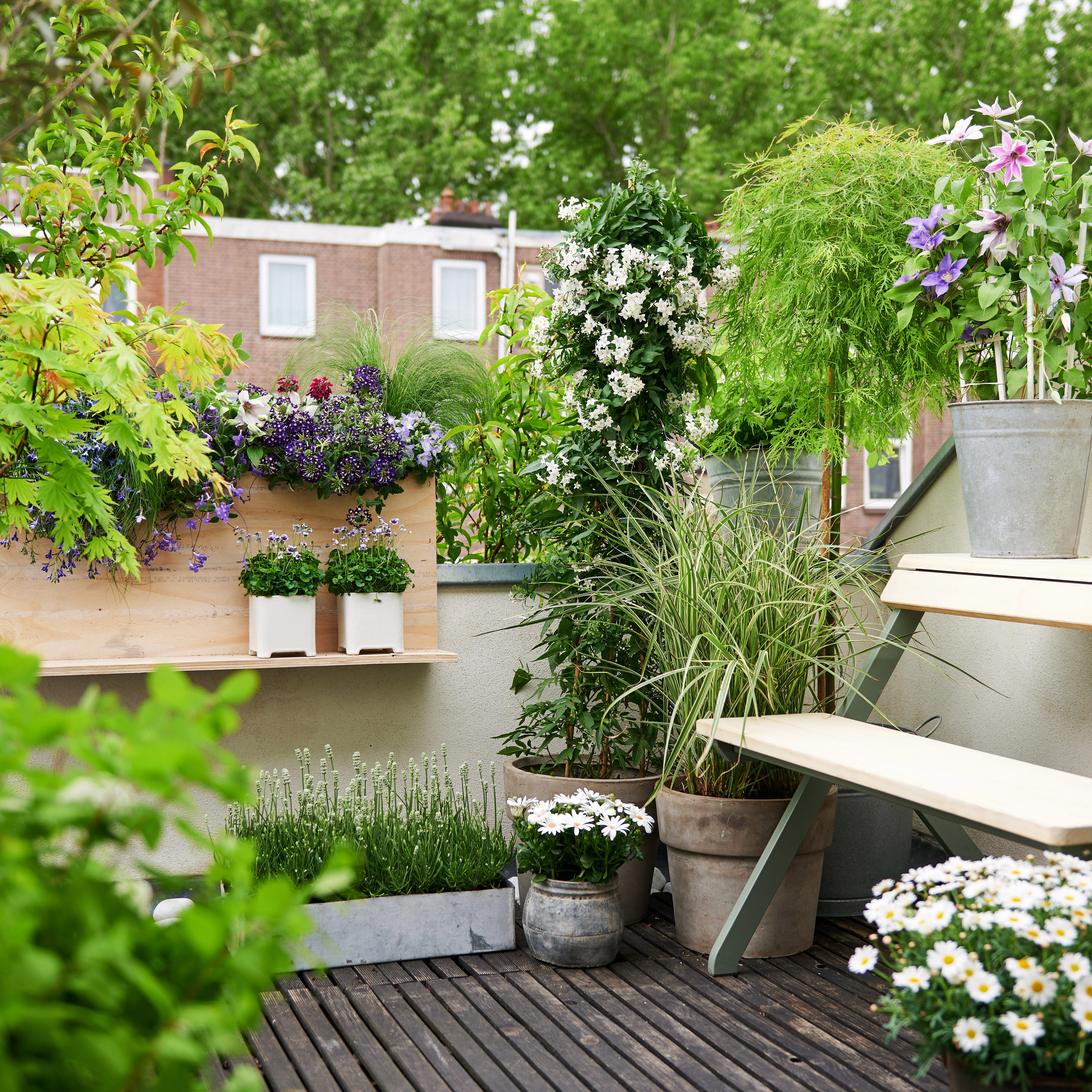 Garden plants on Thejoyofplants.co.uk this spring   Flower Council