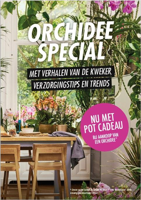 Orchid special in Allerhande (Albert Heijn)