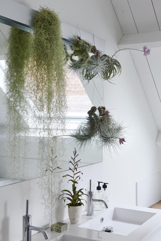 Bathroom Plants May 2019 Houseplants Of The Month